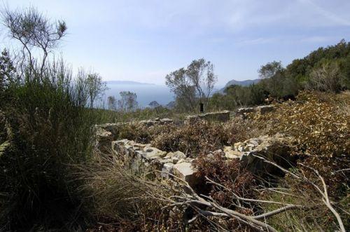 Olive Grove  , Monte Argentario