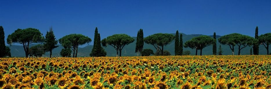 Holiday homes in the Tuscan Maremma